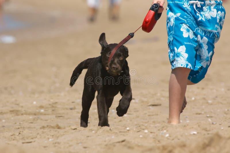Jongen die met puppy loopt stock afbeelding