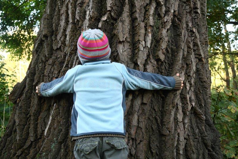 Jongen die reusachtige oude boom probeert te omhelzen stock afbeeldingen