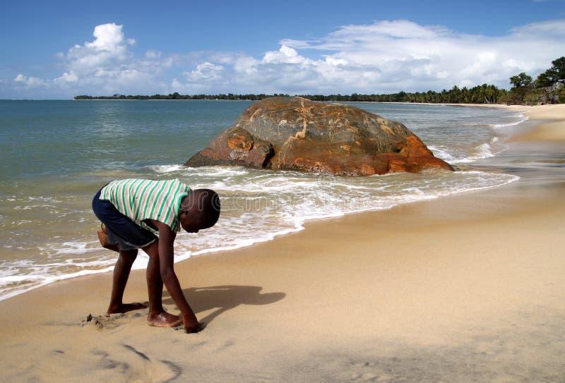 Jongen die zeeschelpen verzamelen royalty-vrije stock foto's