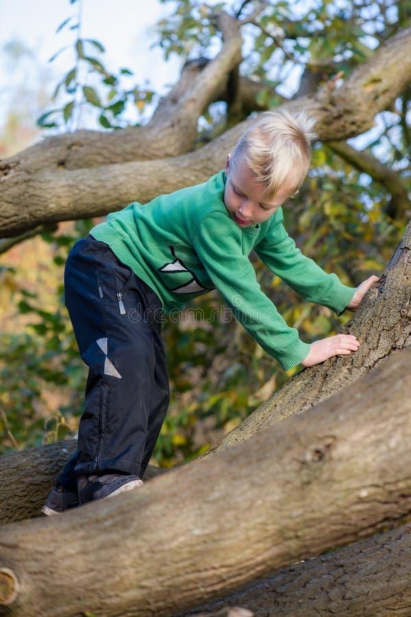 Jongen die zorgvuldig boom beklimmen stock foto's