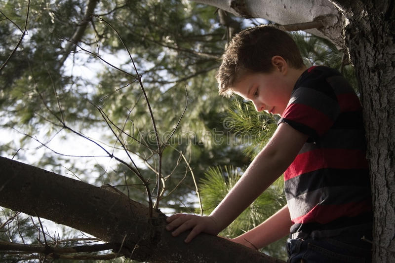 Jongen in een boom royalty-vrije stock foto