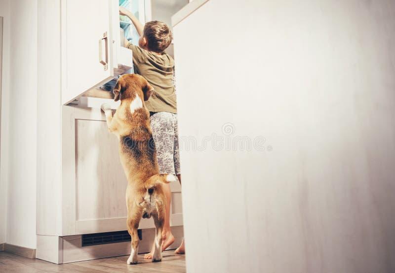 Jongen en brak de hond kijkt iets heerlijk in ijskast stock foto