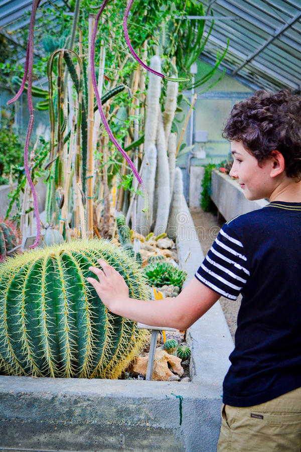 Jongen en cactus royalty-vrije stock foto's