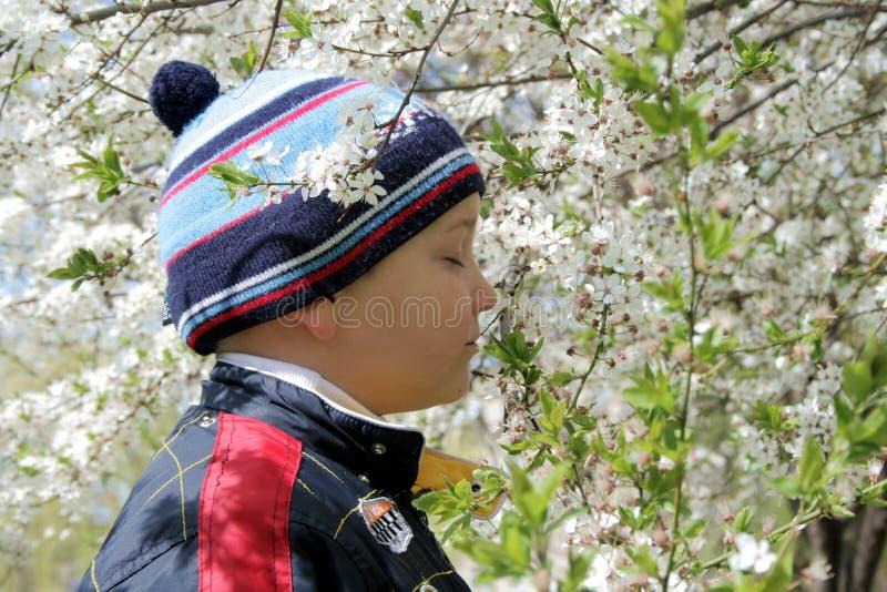 Jongen en een bloeiende boom stock foto