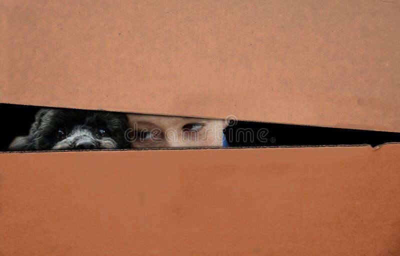 Jongen en hond in een doos wordt verborgen die stock foto's