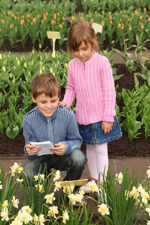 Jongen en meisje in het bekijken narcissen bij serre stock foto