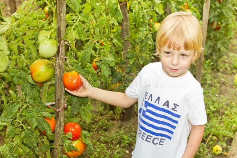 Jongen en tomaat royalty-vrije stock foto