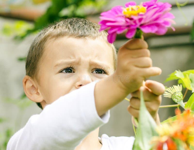 Jongen het plukken bloemen royalty-vrije stock fotografie