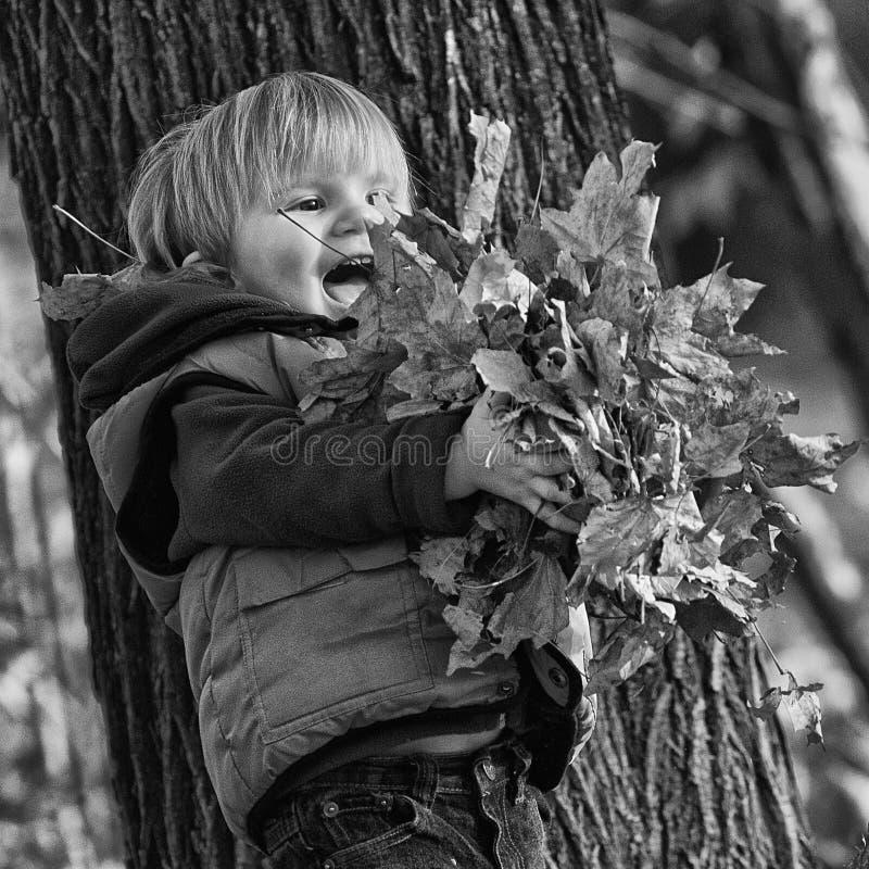Jongen het spelen met bladeren in een park stock afbeeldingen