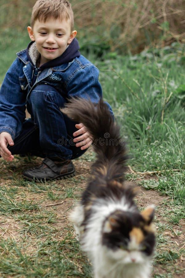 Jongen het spelen met een pluizige kat in het park stock afbeeldingen