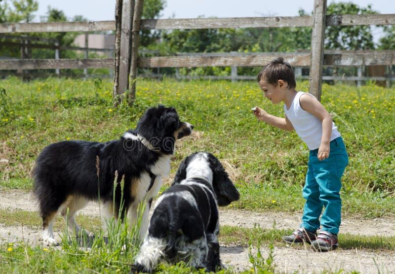 Jongen het spelen met honden stock fotografie