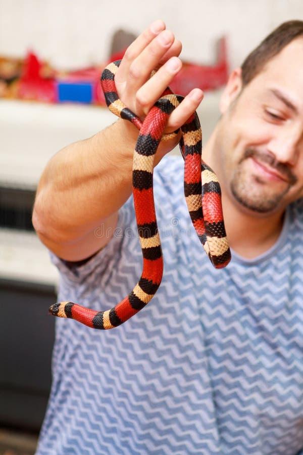 Jongen met slangen De mens houdt in van de slanglampropeltis van de handen het reptielmelk soort van triangulumarizona slang stock afbeelding