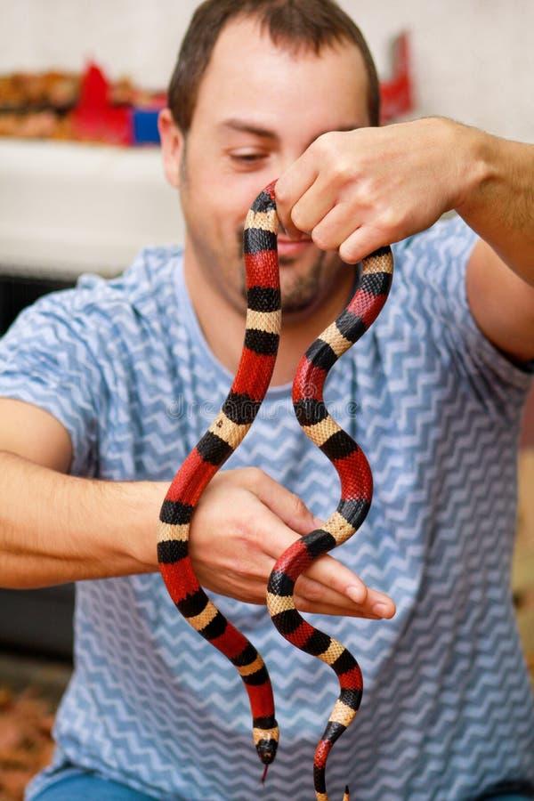 Jongen met slangen De mens houdt in van de slanglampropeltis van de handen het reptielmelk soort van triangulumarizona slang royalty-vrije stock foto's