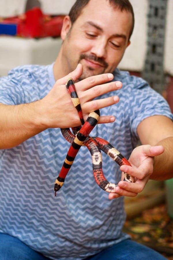 Jongen met slangen De mens houdt in van de slanglampropeltis van de handen het reptielmelk soort van triangulumarizona slang stock foto's