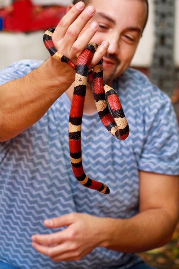 Jongen met slangen De mens houdt in van de slanglampropeltis van de handen het reptielmelk soort van triangulumarizona slang stock foto