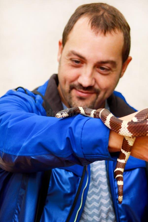 Jongen met slangen De mens houdt in van de slanglampropeltis van de handen reptiel Gemeenschappelijk Koning getulasoort slang royalty-vrije stock afbeeldingen