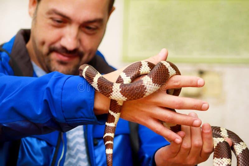 Jongen met slangen De mens houdt in van de slanglampropeltis van de handen reptiel Gemeenschappelijk Koning getulasoort slang royalty-vrije stock foto
