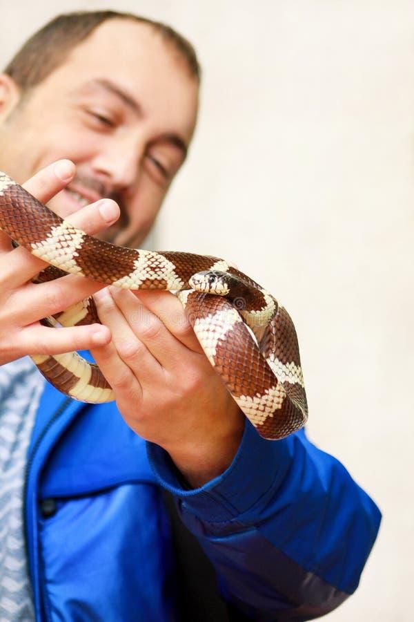 Jongen met slangen De mens houdt in van de slanglampropeltis van de handen reptiel Gemeenschappelijk Koning getulasoort slang stock afbeeldingen