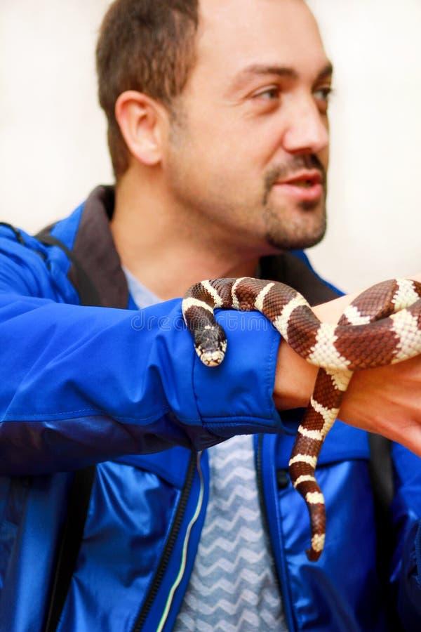 Jongen met slangen De mens houdt in van de slanglampropeltis van de handen reptiel Gemeenschappelijk Koning getulasoort slang stock foto