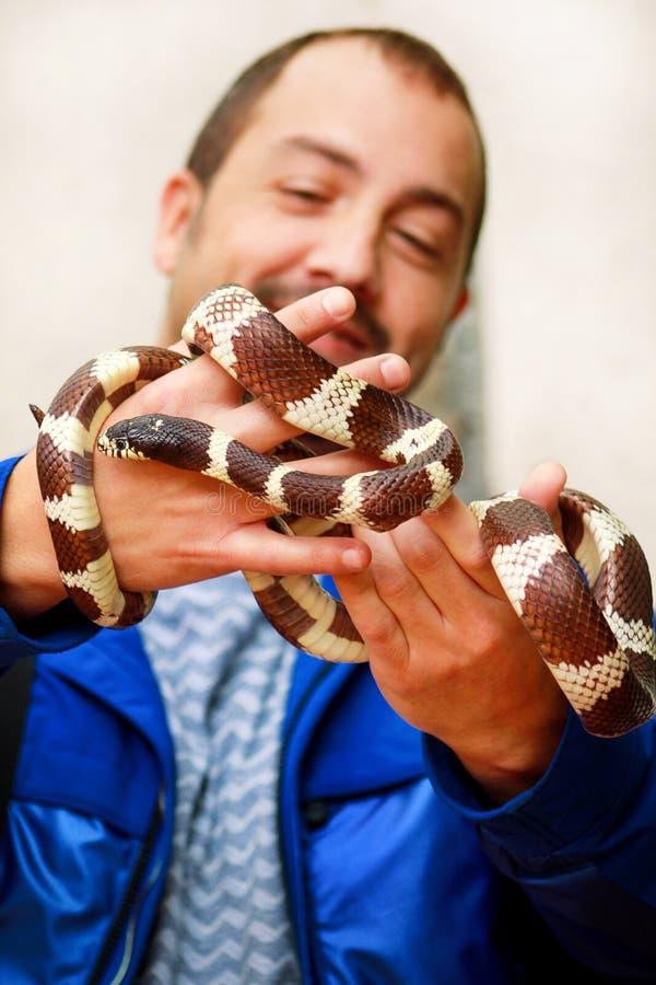 Jongen met slangen De mens houdt in van de slanglampropeltis van de handen reptiel Gemeenschappelijk Koning getulasoort slang stock afbeelding