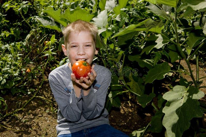 Jongen met tomaat stock foto's