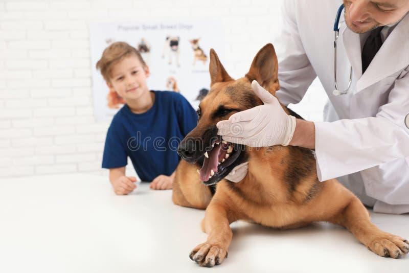 Jongen met zijn huisdieren bezoekende dierenarts Doc. die de tanden van de hond onderzoeken royalty-vrije stock afbeelding