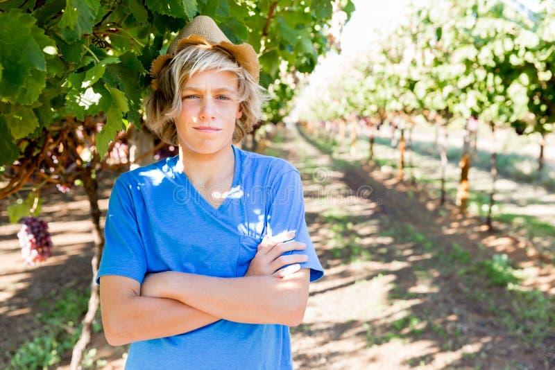 Jongen in wijngaard stock foto's