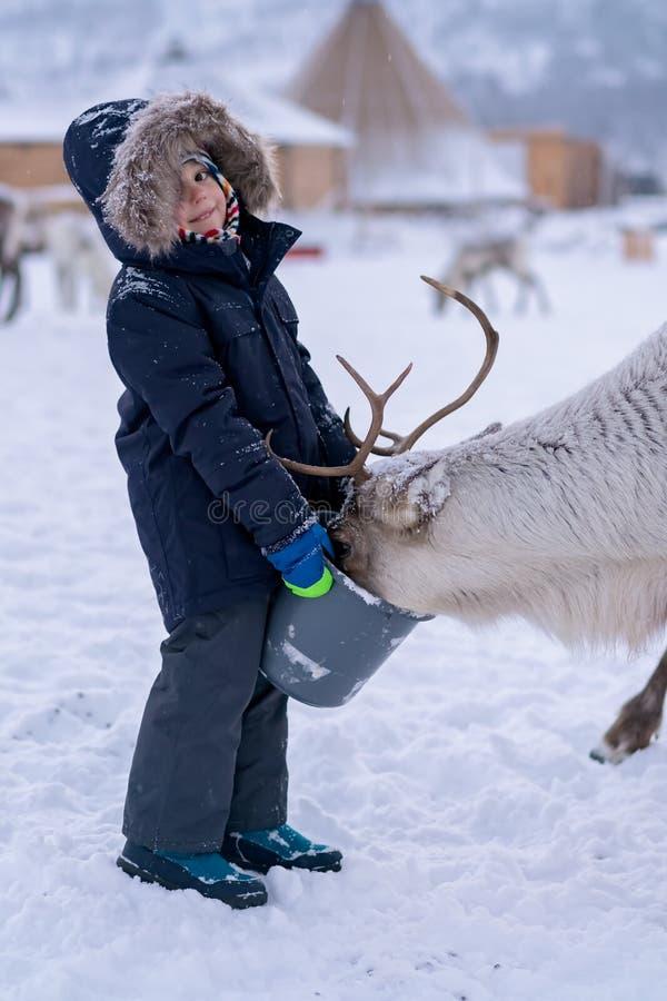 Jongens voedend rendier in de winter stock foto