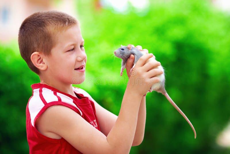 Jongensjong geitje het spelen met rattenhuisdier stock foto