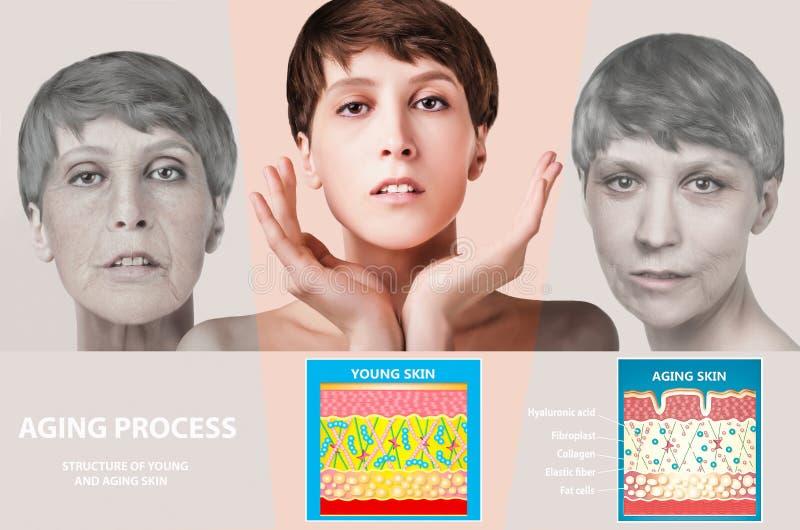 Jongere huid en het verouderen huid elastine en collageen royalty-vrije stock foto's