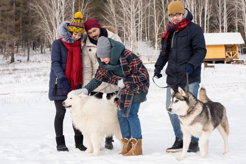Jongeren die met Husky Dogs spelen stock foto's