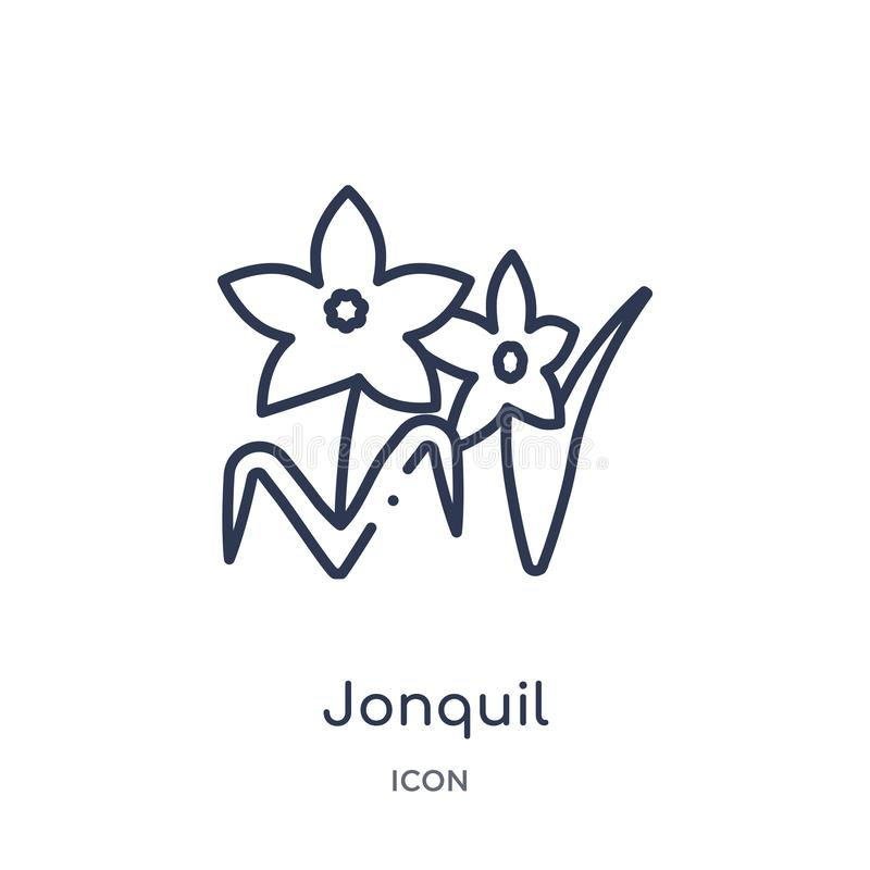 Jonquil icon from nature outline collection. Thin line jonquil icon isolated on white background stock illustration
