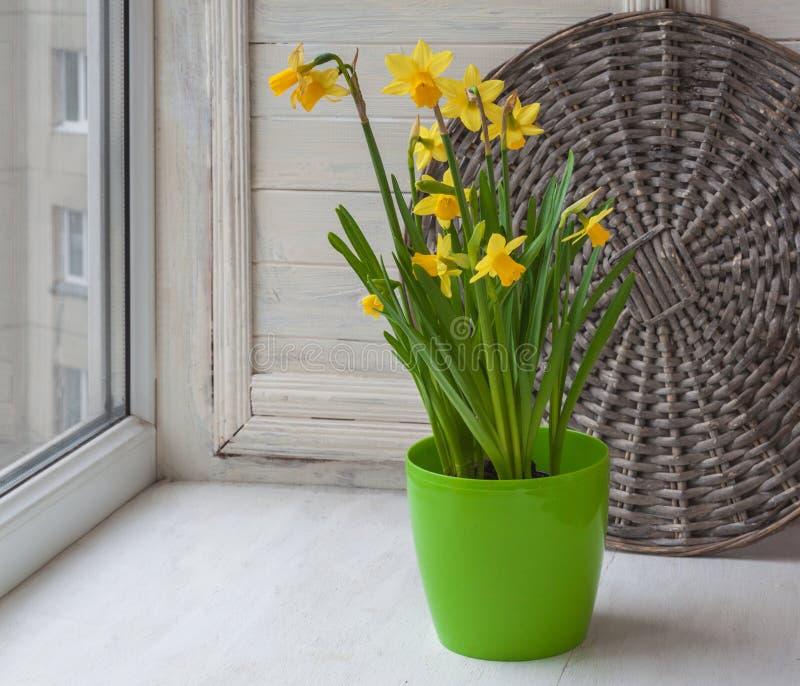 Jonquilles dans un pot vert sur la fenêtre de balcon photographie stock libre de droits