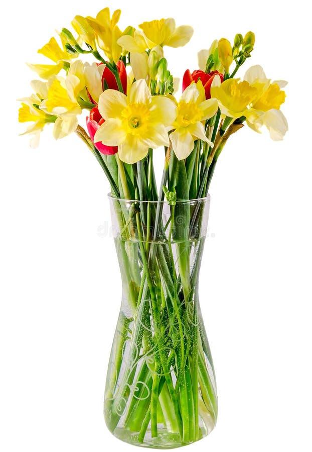 Jonquilles et fleurs jaunes de freesias, tulipes rouges dans un vase transparent, fin, fond blanc, d'isolement images stock