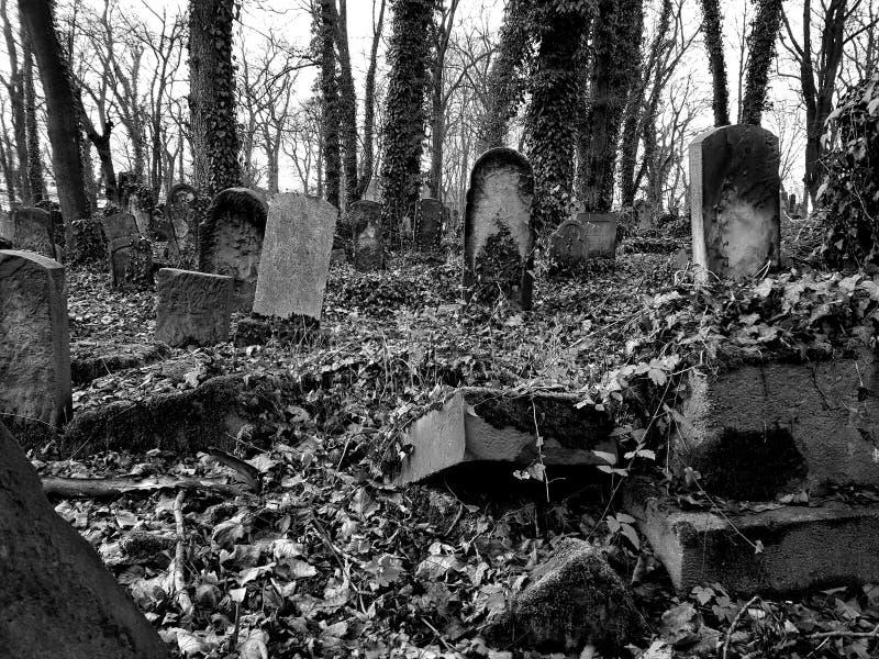 Joodse begraafplaats in Polen stock fotografie