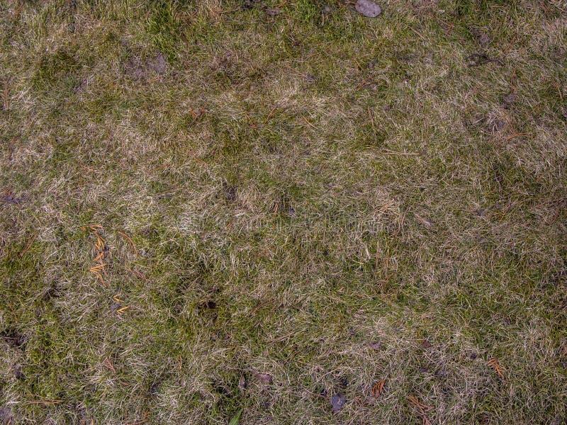 Jord med bakgrund för torkat gräs Sömlös textur av jordningen med torra örter arkivfoto