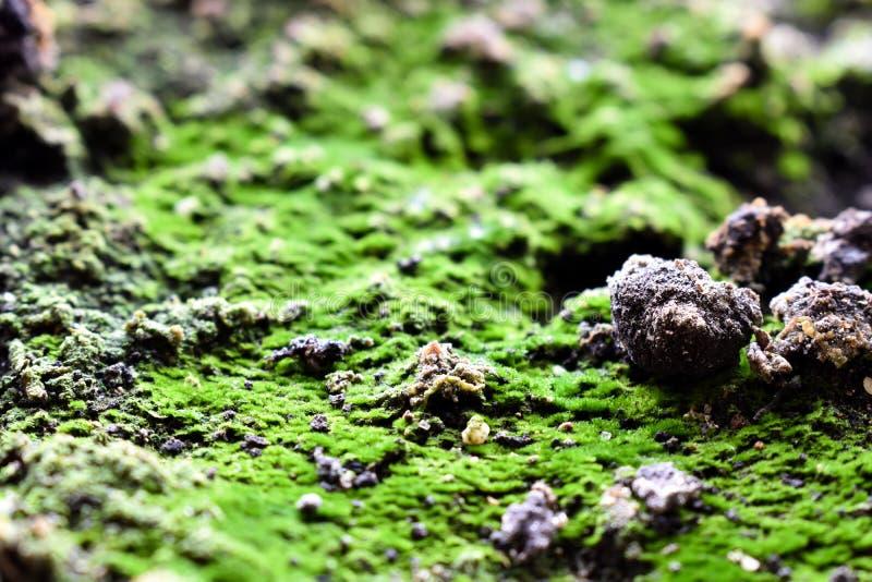 Jord med den gröna mossacloseupen fotografering för bildbyråer