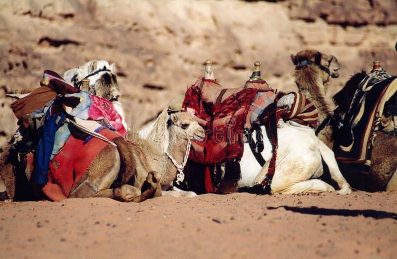 jordan zdjęcia royalty free