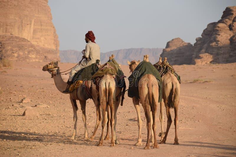 Jordan Desert Camel Wadi Rum fotografía de archivo libre de regalías