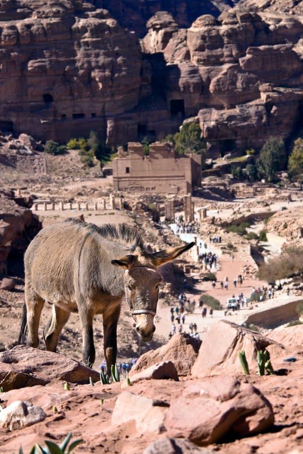 jordan petra fotografia stock