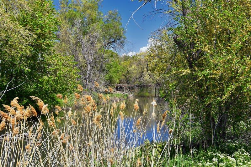Jordan River Parkway Trail, s?quoia Trailhead encadrant la tra?n?e de route express de legs, les vues de panorama avec les arbres images libres de droits