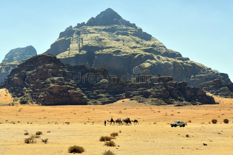 Jordan, Wadi Rum, camel caravan royalty free stock photo