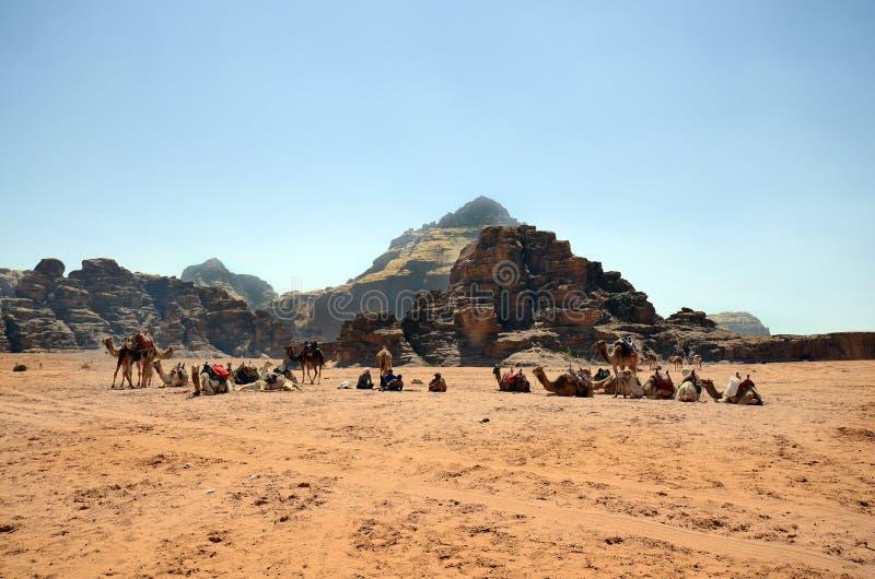 Jordani?, Wadi Rum, Kameel royalty-vrije stock fotografie