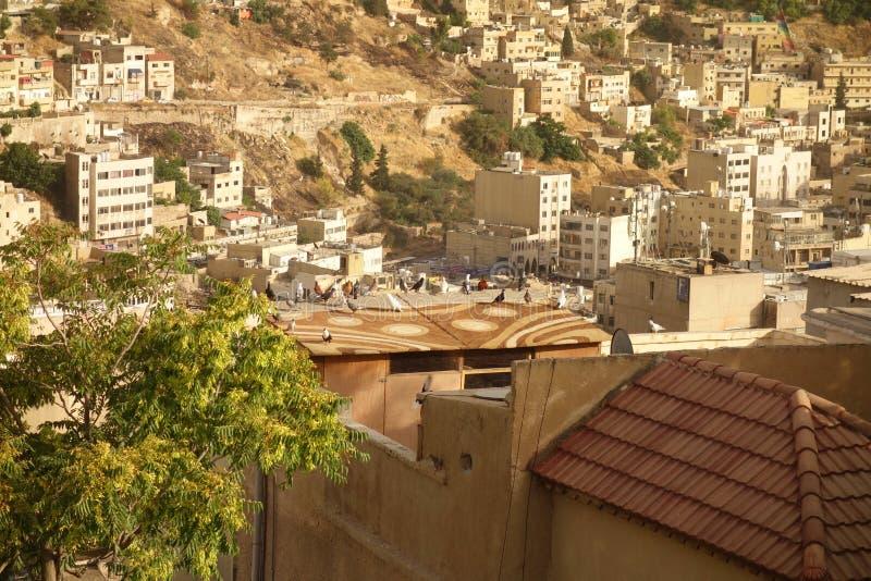 Jordanska duvor royaltyfri foto