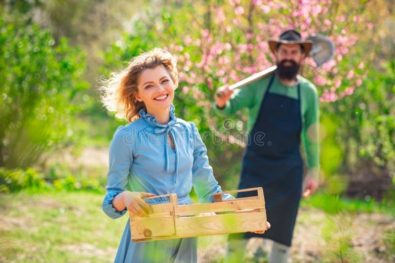 Jordbegrepp Bli en ekologisk jordbrukare Gardening på våren - ett lyckligt par som skördar och har mycket kul Jag gillar arkivfoton