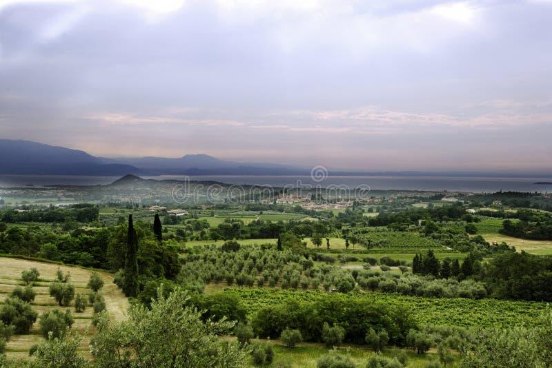 Jordbruk för druvor och vin arkivfoto
