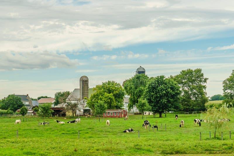 Jordbruk för fält för ladugård för Amish landslantgård och betakor i Lancaster, PA arkivbilder