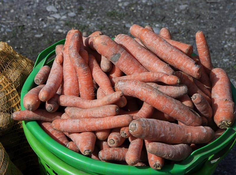 Jordbruk gräsplanhink med skördade morötter arkivfoto