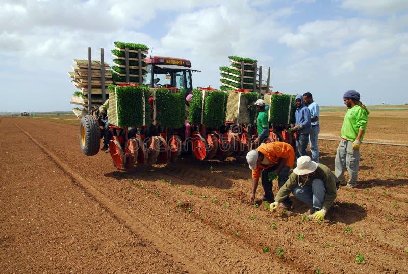 Jordbruk i den Negev öknen Israel fotografering för bildbyråer