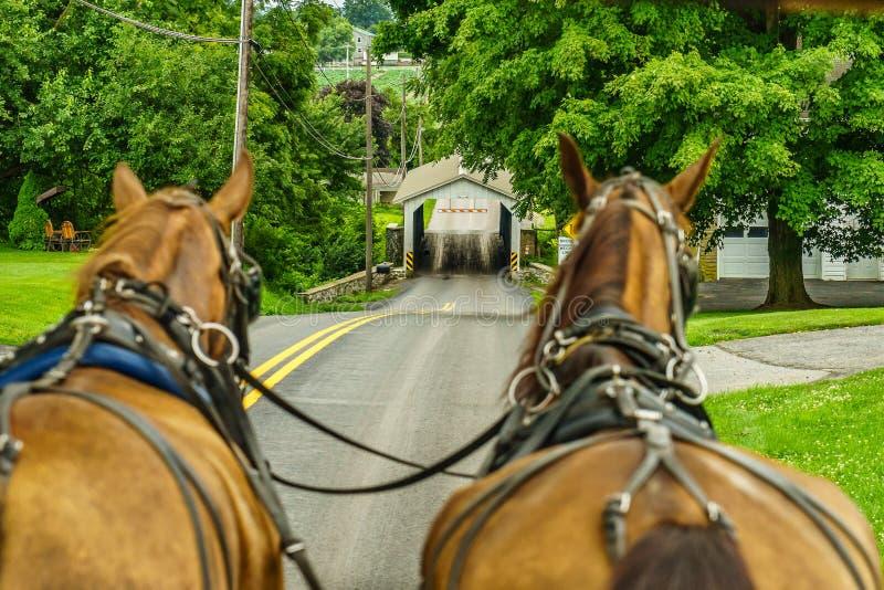 Jordbruk och slangar för fält för Amish landslantgård i Lancaster, PA royaltyfria foton